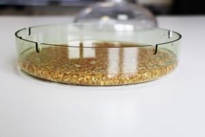 Les graines bioSnacky sont immergées